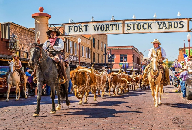 Fort Worth stockyards rodeo show cattle and cowboys and horses